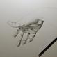 Bleistiftzeichnung: Hand