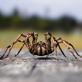 Artikelserie: 3D Modell einer Spinne